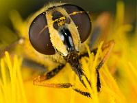 Pollensauger