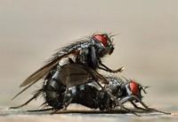 Mach noch ne Fliege