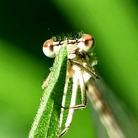 Dragon Fly 12