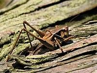 Woodclimber