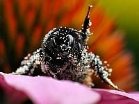 Weg hier, meine Pollen!