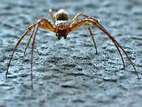 die spinnen, die Libellen
