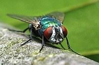 Die Fliege, der Ast, HURZ!
