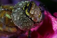 Wet Colours