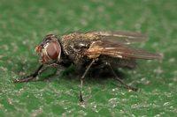 und noch ne Fliege