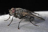 Gähn, noch ne Fliege