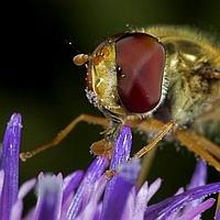 Pollensauger(Hoover)