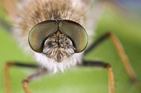 metallic eyes 1