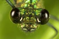 greenmetalic