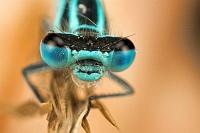 Pech-Libelle