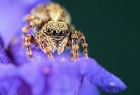 Arachno(p)flower