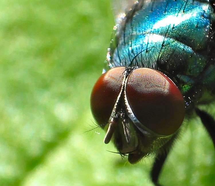 Flyeye2