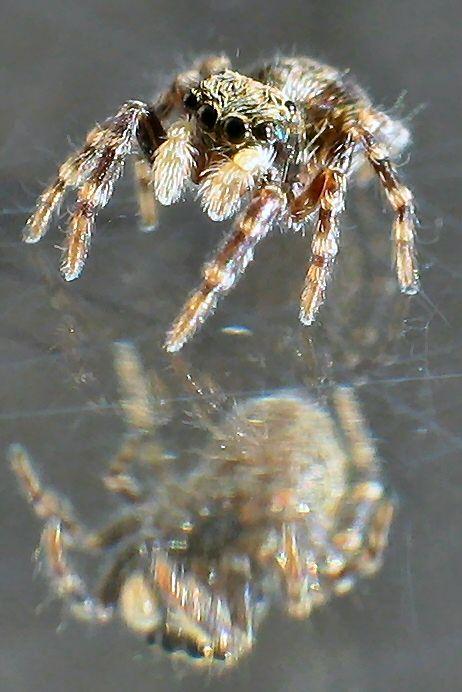 little Spider 5