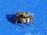little Spider 7