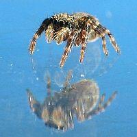 little Spider 6