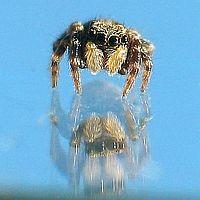 little Spider 4